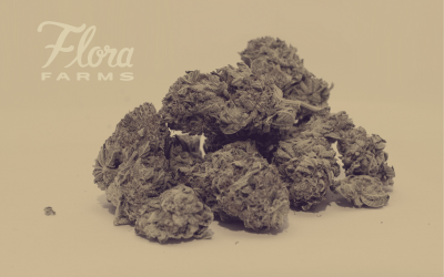 Indica vs Sativa: Which Cannabis Strain is Right for You?