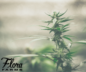 The Difference Between CBD & THC Explained