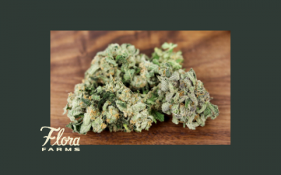 Learn About Our Current Flora Farms Flower Strains