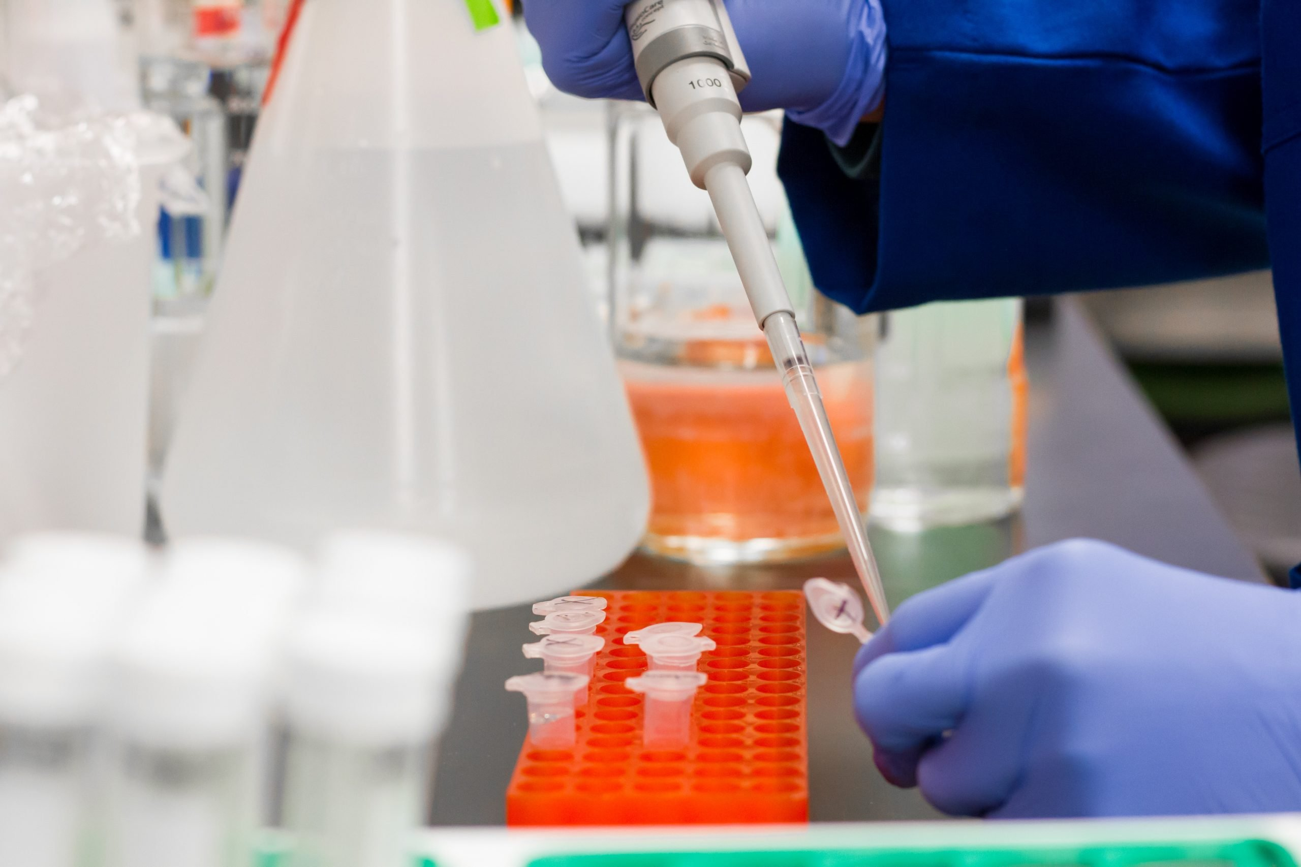 cannabis news - scientist fills sample containers using a pipette